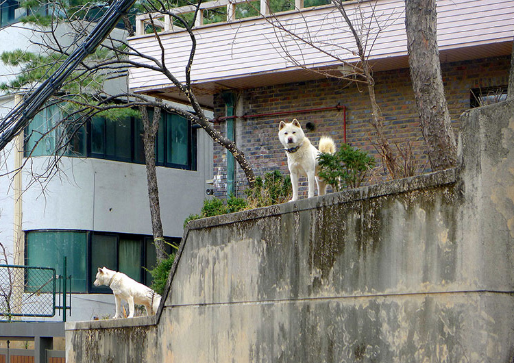 2014-Seoul-P1070179BS